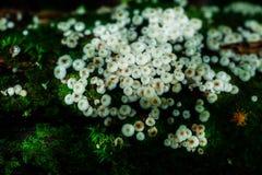 Pequeñas plantas en Kew Mae Pan Nature Trail Foto de archivo libre de regalías