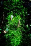 Pequeñas plantas en Kew Mae Pan Nature Trail Fotos de archivo