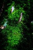 Pequeñas plantas en Kew Mae Pan Nature Trail Imágenes de archivo libres de regalías
