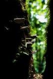 Pequeñas plantas en Kew Mae Pan Nature Trail Fotografía de archivo libre de regalías