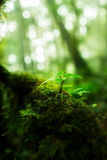 Pequeñas plantas en Kew Mae Pan Nature Trail Imagen de archivo