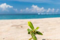 Pequeñas plantas en la arena de la playa Isla tropical Bali, Indonesia Imagenes de archivo