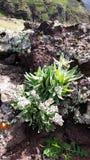 Pequeñas plantas en la roca Imágenes de archivo libres de regalías