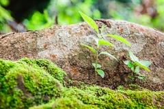 Pequeñas plantas en la tierra con el musgo verde Fotografía de archivo libre de regalías