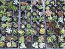 Pequeñas plantas verdes de diversas formas Foto de archivo libre de regalías