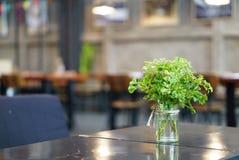 Pequeñas plantas verdes en el vidrio que sostiene encendido la tabla de la madera Imagen de archivo