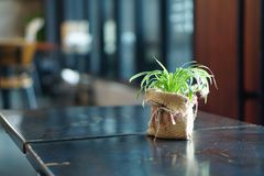 Pequeñas plantas verdes en la harpillera que sostiene encendido la tabla de la madera Imagenes de archivo