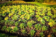 Pequeñas plantas y flores growging fuera de suelo en jardín Imagenes de archivo