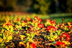 Pequeñas plantas y flores growging fuera de suelo en jardín Imágenes de archivo libres de regalías