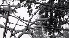 Pequeñas ramas de los árboles inactivos cubiertos en caída de las nevadas fuertes almacen de metraje de vídeo