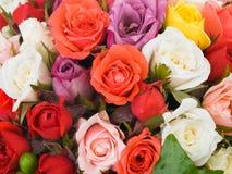 Pequeñas rosas Imagen de archivo libre de regalías