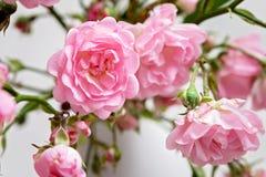 Pequeñas rosas rosadas en un florero, fondo de la textura Imagen de archivo