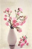 Pequeñas rosas rosadas en un florero, fondo de la textura Imagen de archivo libre de regalías