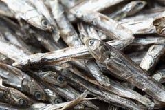 Pequeñas sardinas secadas Fotografía de archivo