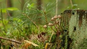 Pequeñas setas mitseny en árboles caidos metrajes