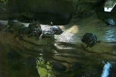 Pequeñas tortugas fotos de archivo