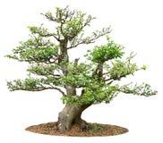Pequeño árbol Imagen de archivo