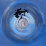 Pequeño árbol Imagenes de archivo