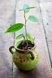 Pequeño árbol Foto de archivo libre de regalías