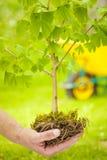 Pequeño árbol con las raíces en fondo verde Imagen de archivo libre de regalías