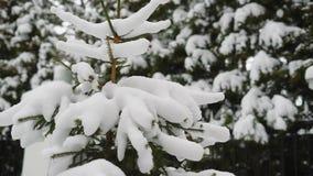 Pequeño árbol de abeto cubierto con nieve en parque frío del invierno almacen de metraje de vídeo