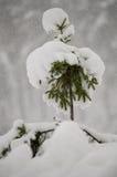 Pequeño árbol de navidad debajo de la nieve blanca de la nieve acumulada por la ventisca del casquillo Fotografía de archivo libre de regalías