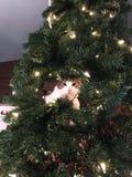 Pequeño árbol de navidad del gato fotos de archivo
