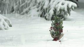 Pequeño árbol de navidad en una nieve metrajes