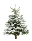 Pequeño árbol de navidad perfecto en nieve fotografía de archivo libre de regalías