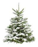 Pequeño árbol de navidad perfecto en nieve Imagen de archivo