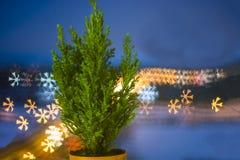 Pequeño árbol de navidad vivo en un pote en fondo del bokeh copo de nieve del bokeh imágenes de archivo libres de regalías