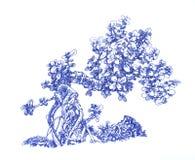 Pequeño árbol del dinero Imagen de archivo