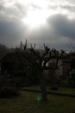 Pequeño árbol desnudo contra luz del sol directa Imagen de archivo libre de regalías
