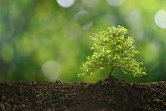 Pequeño árbol en el crecimiento ligero de la mañana Imágenes de archivo libres de regalías