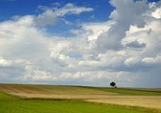 Pequeño árbol en el horizonte en paisaje rural Fotografía de archivo