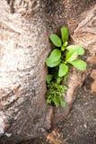 Pequeño árbol en la esquina. fotografía de archivo