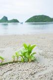 Pequeño árbol en la playa Fotos de archivo