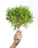 Pequeño árbol en las manos Fotos de archivo