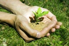 Pequeño árbol en manos Imagen de archivo libre de regalías