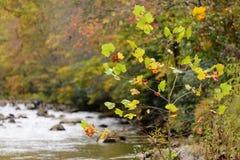 Pequeño árbol en otoño Foto de archivo libre de regalías