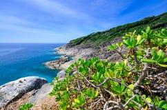 Pequeño árbol en punto de opinión de la isla de Tachai Fotografía de archivo