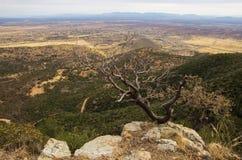 Pequeño árbol en una roca y una forma de la bonita vista una montaña foto de archivo libre de regalías