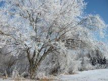 Pequeño árbol escarchado Imágenes de archivo libres de regalías