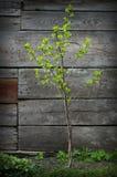 Pequeño árbol hermoso Imagen de archivo