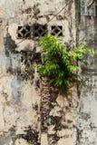 Pequeño árbol que crece en la pared Imagen de archivo