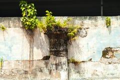 Pequeño árbol que crece en la pared Imágenes de archivo libres de regalías