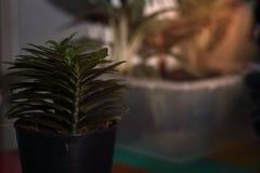 Pequeño árbol verde en tema oscuro del pote imagenes de archivo