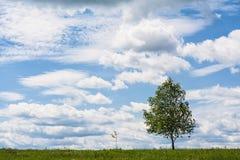Pequeño árbol y árbol grande Imágenes de archivo libres de regalías