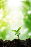 Pequeño árbol y sol de la nueva vida Foto de archivo