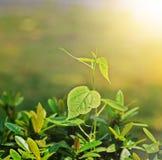 Pequeño árbol y sol de la nueva vida Imagen de archivo